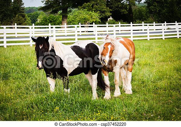 Horses in pasture - csp37452220