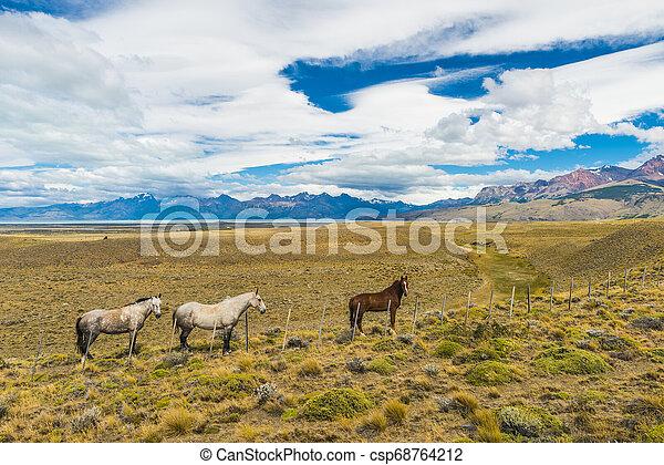 Horses in Patagonian plains - csp68764212