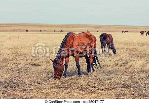 Horses in prairie - csp45047177