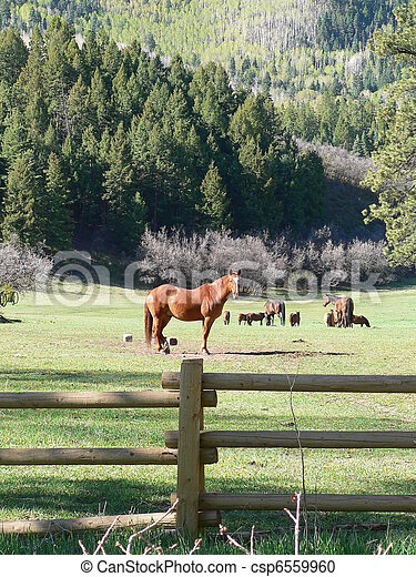 Horses in the forest - csp6559960