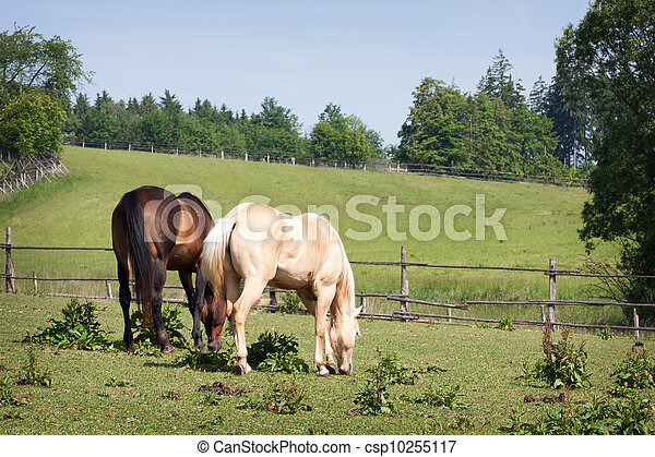 Horses in the meadow - csp10255117