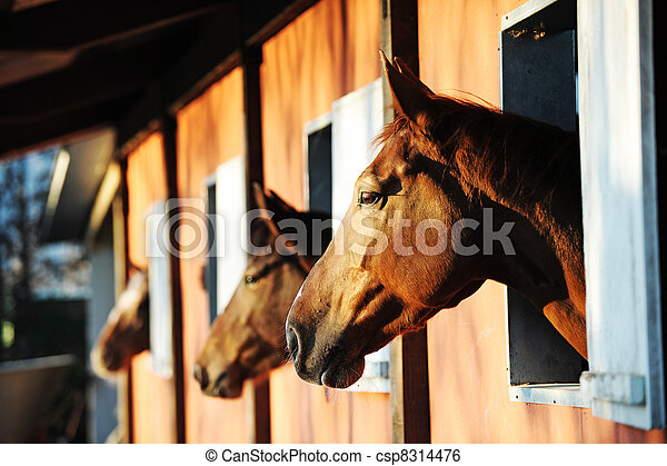 Horses in their stable - csp8314476