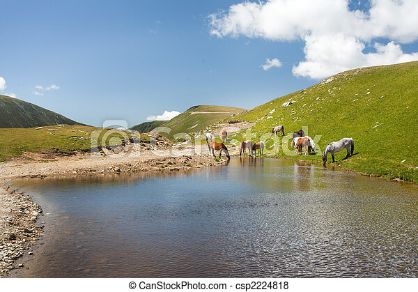 Horses near a pond in mountains - csp2224818