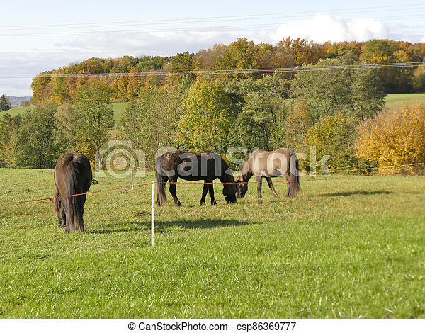 horses on a meadow in autumn in Germany - csp86369777