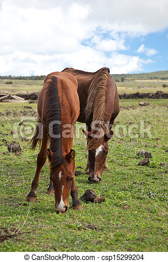 Horses on Easter Island - csp15299204