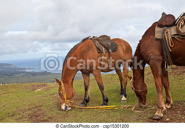 Horses on Easter Island - csp15301200