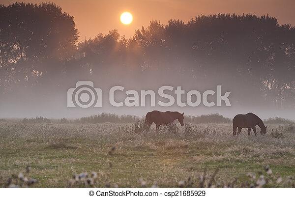 horses on misty pasture at sunrise - csp21685929