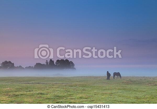 horses on pasture at sunrise - csp15431413