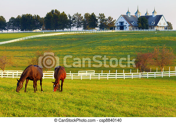 Horses on the Farm - csp8840140