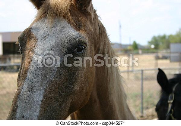 Horses - csp0445271