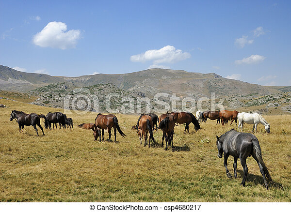 Horses - csp4680217