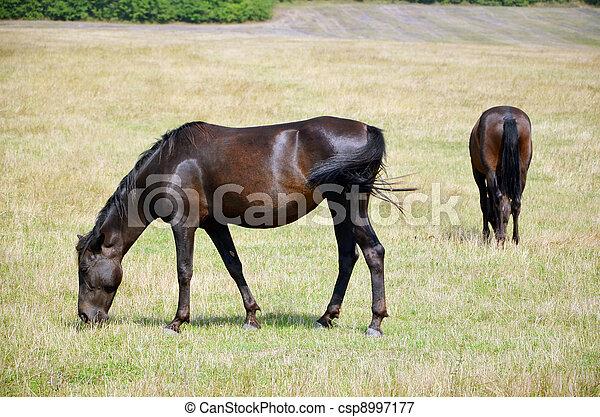 horses - csp8997177