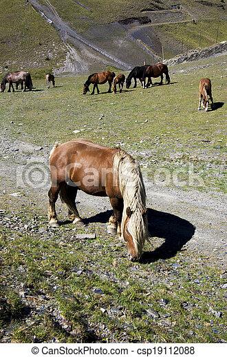 Horses - csp19112088