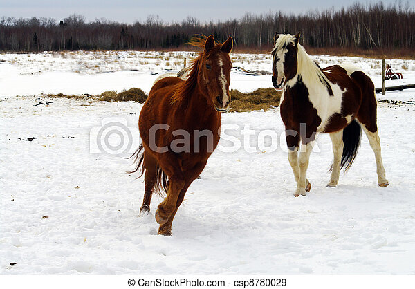Horses Racing - csp8780029
