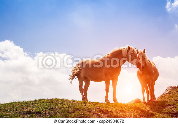 horses rest during the sunset in the mountain - csp24304672