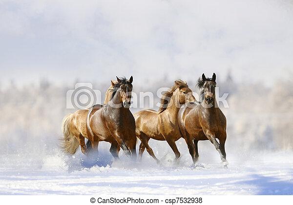 horses run - csp7532938