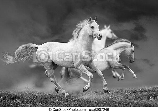 horses run - csp8907246