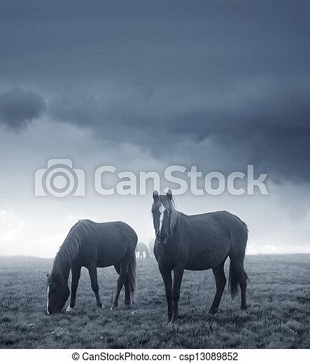 horses - csp13089852