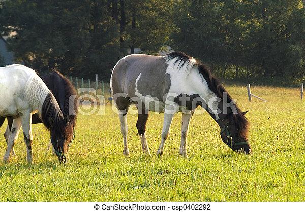 Horses - csp0402292