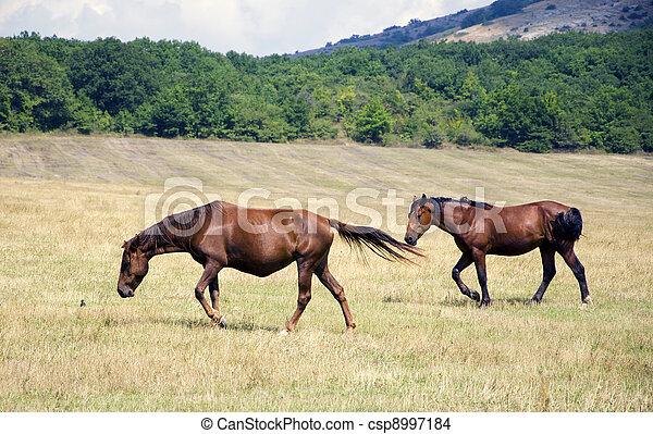horses - csp8997184