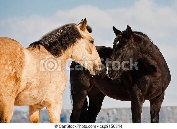 horses - csp9156344