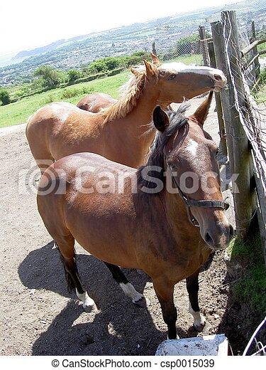 Horses - csp0015039