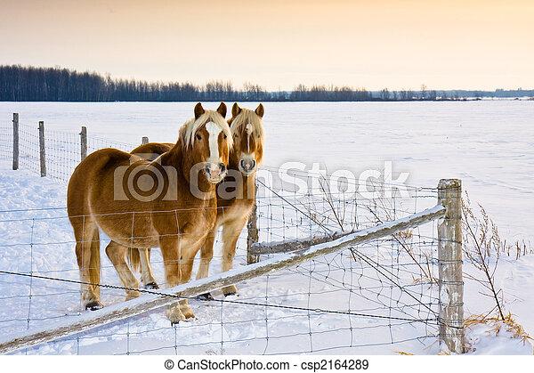Horses - csp2164289
