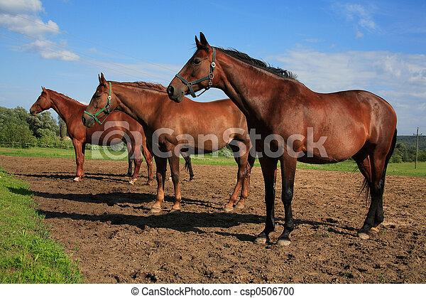 horses - csp0506700