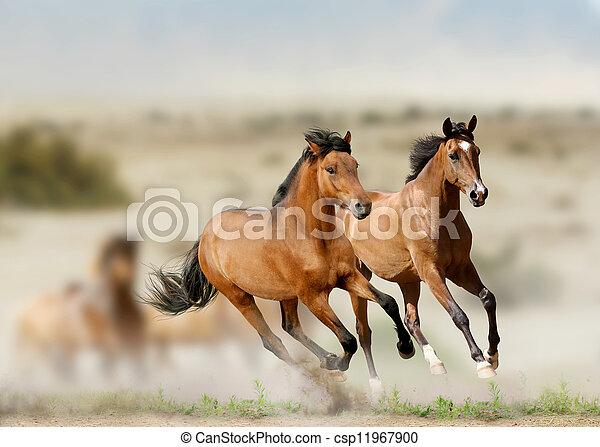 horses - csp11967900