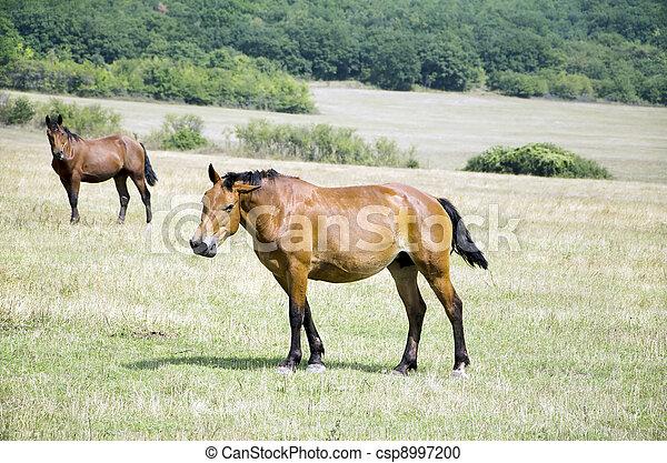 horses - csp8997200