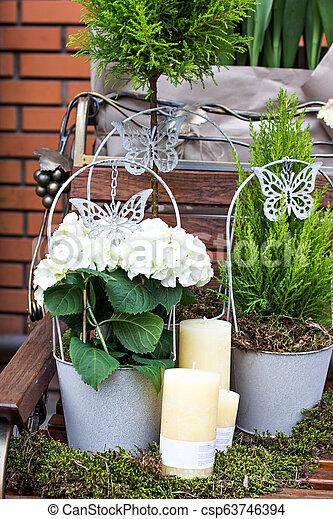 hortensia, macrophylla - csp63746394