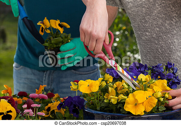 Horticulturists planting flowers - csp20697038