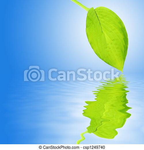 Hosta Leaf Beauty - csp1249740
