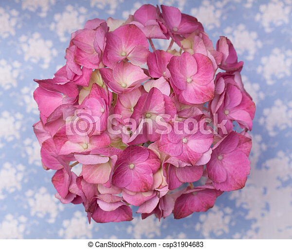 Hot pink hortensia flowers on a blue background with white splashes hot pink hortensia flowers on a blue background with white splashes csp31904683 mightylinksfo