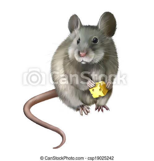 House mouse eating piece of cheese - csp19025242