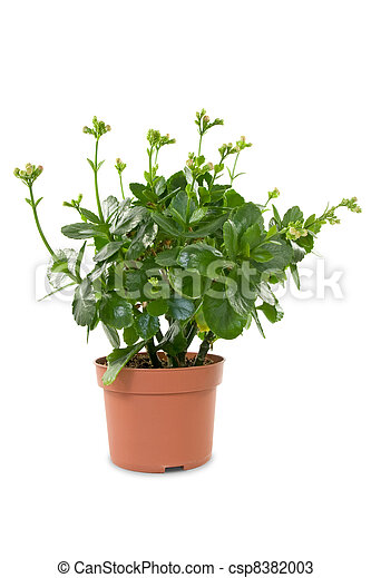 house plant in a pot - csp8382003