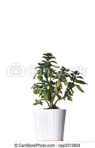 House plant in a white pot. - csp3313824