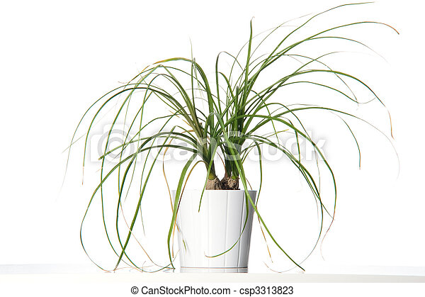 House plant in a white pot. - csp3313823