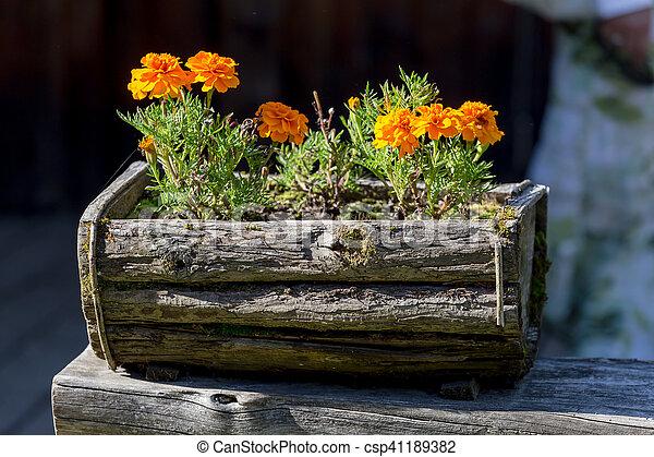 Bloemen In Pot.Houten Pot Bloemen
