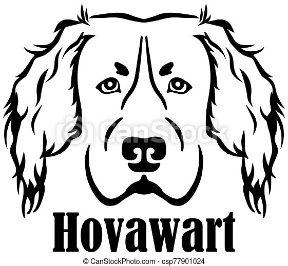 Hovawart head with name - csp77901024