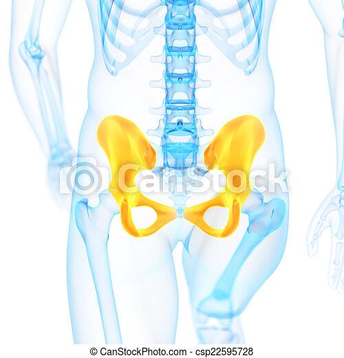Hueso de la cadera. Cadera, médico, hueso, ilustración, 3d.