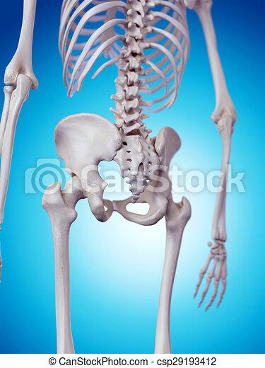 Hueso de la cadera. Cadera, medically, exacto, hueso, ilustración.