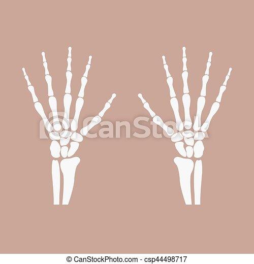 Huesos, muñeca, manos. -, ilustración, vector, muñeca, manos... clip ...
