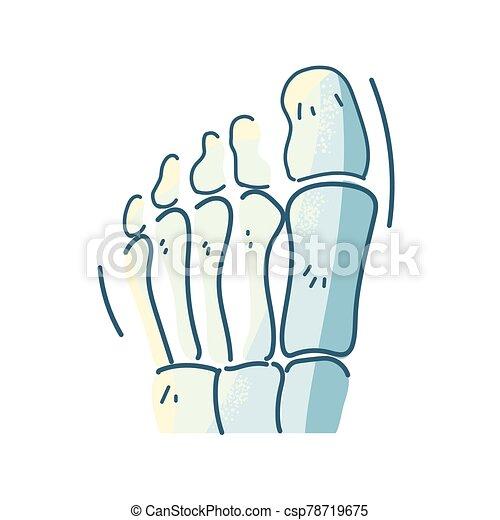 huesos, parte del cuerpo, blanco, pie, plano de fondo - csp78719675