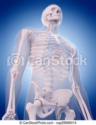Exacto, -, ilustración, medically, huesos, tórax clipart - Buscar ...