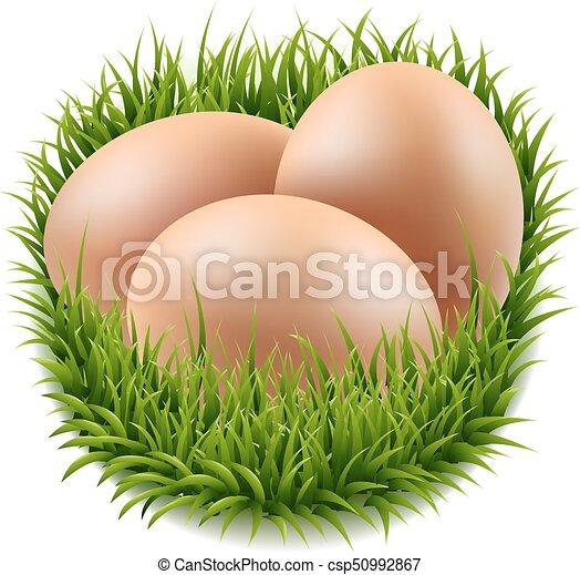 Huevos con hierba - csp50992867