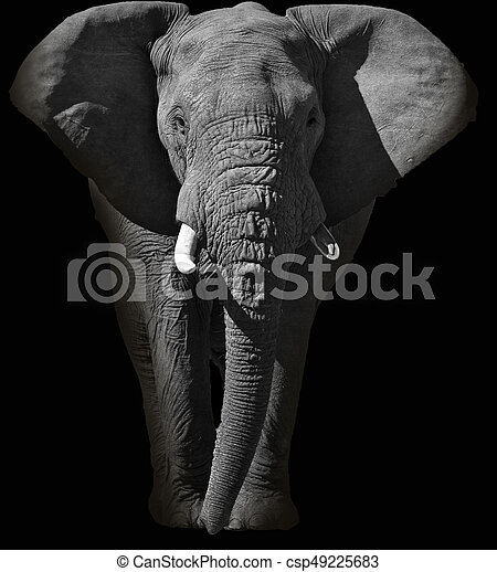 Huge African elephant portrait - csp49225683