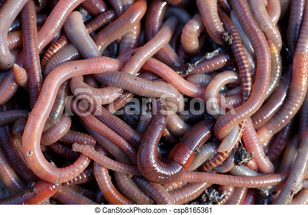Huge amount of earthworms close to fishing - csp8165361