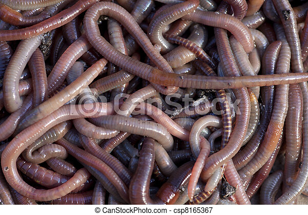 Huge amount of earthworms close to fishing - csp8165367