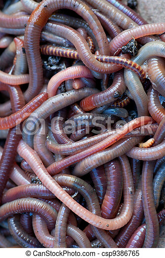 Huge amount of earthworms close to fishing - csp9386765